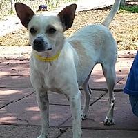 Adopt A Pet :: ABNER - Dallas, TX