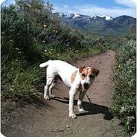 Adopt A Pet :: LEGEND - Scottsdale, AZ