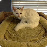 Adopt A Pet :: Ashes - Lake Charles, LA