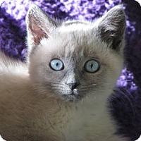 Adopt A Pet :: Lauryn - Davis, CA