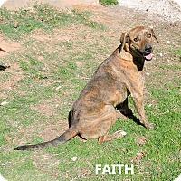 Adopt A Pet :: Faith - Washington, GA