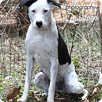 Adopt A Pet :: Qualtaga - Broadway, NJ