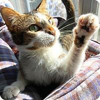 Adopt A Pet :: Roxy - Duluth, GA