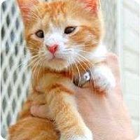 Adopt A Pet :: Magoo - Chesapeake, VA