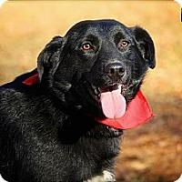 Adopt A Pet :: Micah - Albany, NY