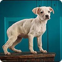 Adopt A Pet :: Roo - Owensboro, KY
