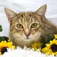 Adopt A Pet :: Bunny - St. Cloud, FL