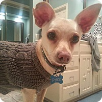 Adopt A Pet :: Paco - Arlington, TX