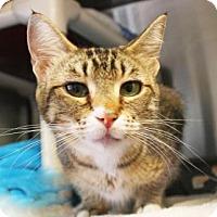 Adopt A Pet :: Brisa - Bellevue, WA