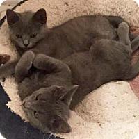Adopt A Pet :: Bess - Merrifield, VA