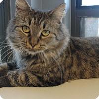 Adopt A Pet :: Zoey - Lake Charles, LA