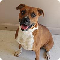 Adopt A Pet :: Princess - Hagerstown, MD