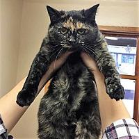 Adopt A Pet :: Reena - Eldora, IA