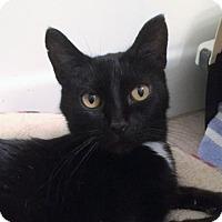 Adopt A Pet :: Gwen - West Des Moines, IA