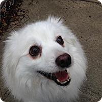 Adopt A Pet :: Yuki - Sheboygan, WI