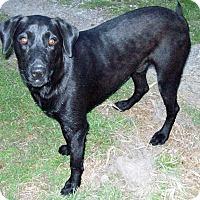 Adopt A Pet :: Remi - Waller, TX