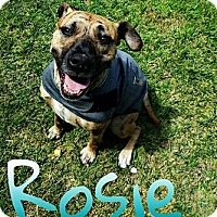 Adopt A Pet :: Rosie - Fargo, ND