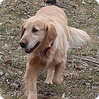 Adopt A Pet :: Kara - Minnetonka, MN
