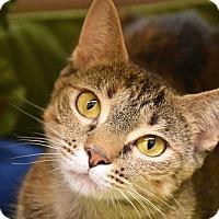 Adopt A Pet :: Mae - Bristol, CT