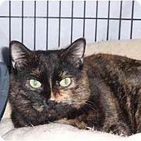 Adopt A Pet :: Iris Rose - Milwaukee, WI