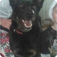 Adopt A Pet :: Mira - Hamilton, MT