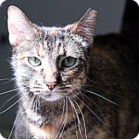 Adopt A Pet :: Frannie Faygo - Chicago, IL