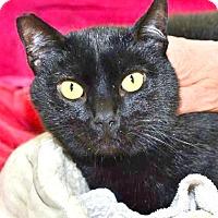Adopt A Pet :: Blackie - Davis, CA