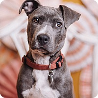 Adopt A Pet :: Angel - Portland, OR