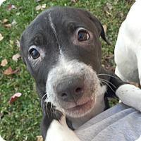 Adopt A Pet :: Serenity - Cincinnati, OH