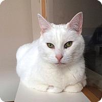 Adopt A Pet :: Trixie - Winchendon, MA