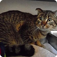 Adopt A Pet :: Dusty - Waupaca, WI