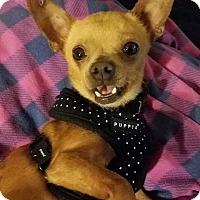 Adopt A Pet :: Manley - San Diego, CA