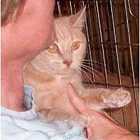 Adopt A Pet :: Olive - Stuarts Draft, VA