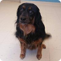 Adopt A Pet :: Dallas - Front Royal, VA