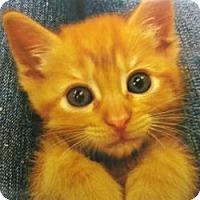 Adopt A Pet :: Rey - San Jose, CA
