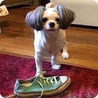 Adopt A Pet :: Winston - Charlotte, NC