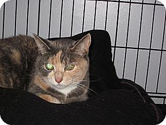 Calico Cat for adoption in Salem, Oregon - Wendy