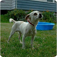 Adopt A Pet :: Small Dog Fosters Needed - Shoreline, WA