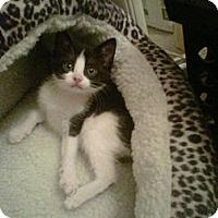 Adopt A Pet :: Quiggles - Los Angeles, CA