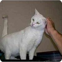 Adopt A Pet :: Tapioca - Chesapeake, VA