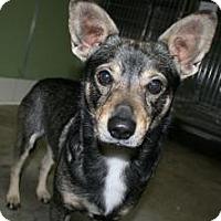Adopt A Pet :: Dominick - Canoga Park, CA