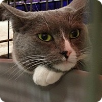 Adopt A Pet :: MOON - Diamond Bar, CA