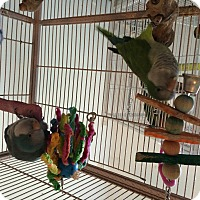 Adopt A Pet :: Corky & Jesse - Punta Gorda, FL
