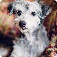 Adopt A Pet :: Wilbur ~ Adoption Pending - Youngstown, OH