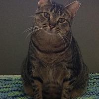 Adopt A Pet :: Sadie - Stamford, CT