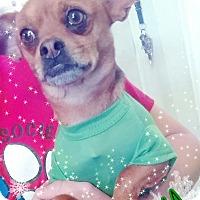 Adopt A Pet :: Mikey - Odessa, TX