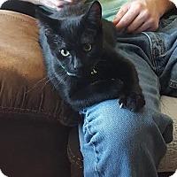 Adopt A Pet :: Bam Bam - Hazel Park, MI