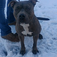 Adopt A Pet :: Ace - Cherry Valley, NY