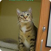 Adopt A Pet :: Porscha - ROSENBERG, TX