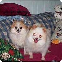 Adopt A Pet :: Chino and Princess - Chesapeake, VA